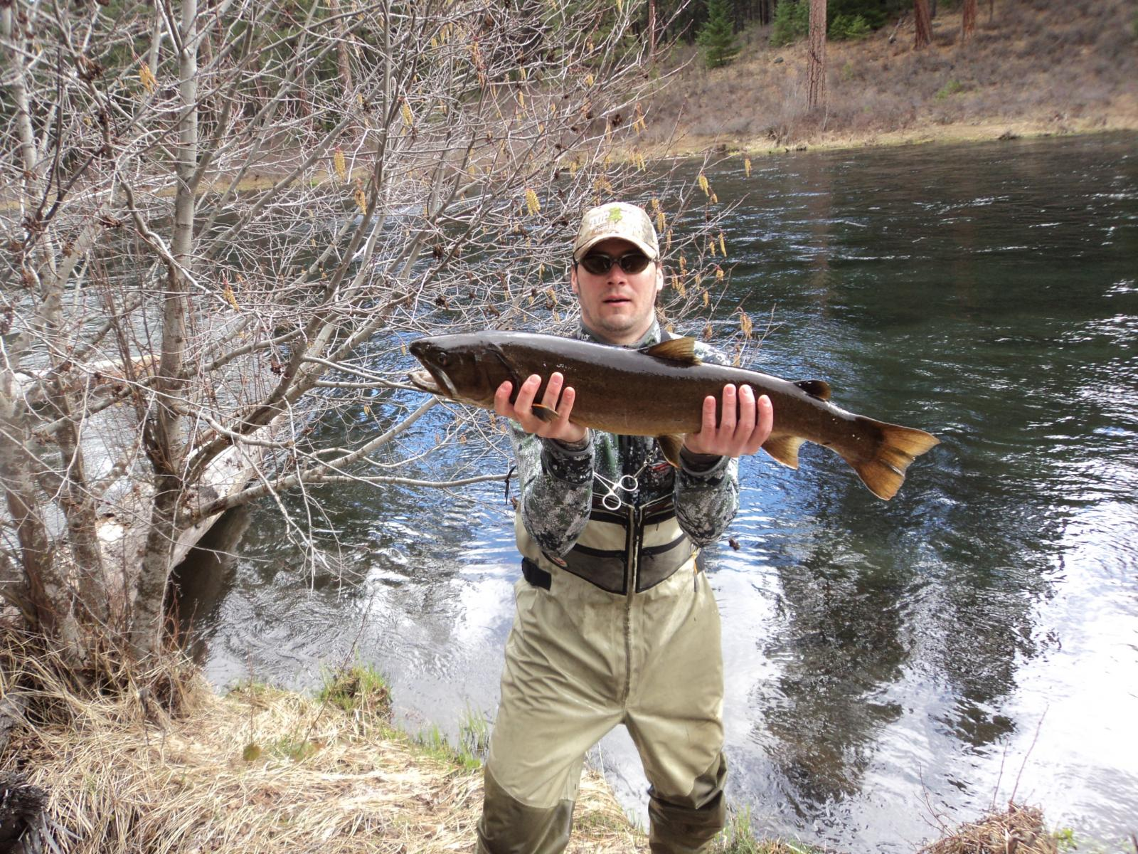Bull trout members gallery maine fly fish for Fly fishing maine